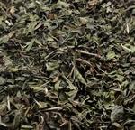 Kruizemunt - Mentha spicata var. crispata