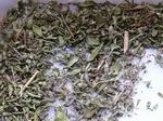 Tijm wild - Thymus serpyllum