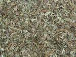 Wilgenroosje kleinbloemig Epilobii herba